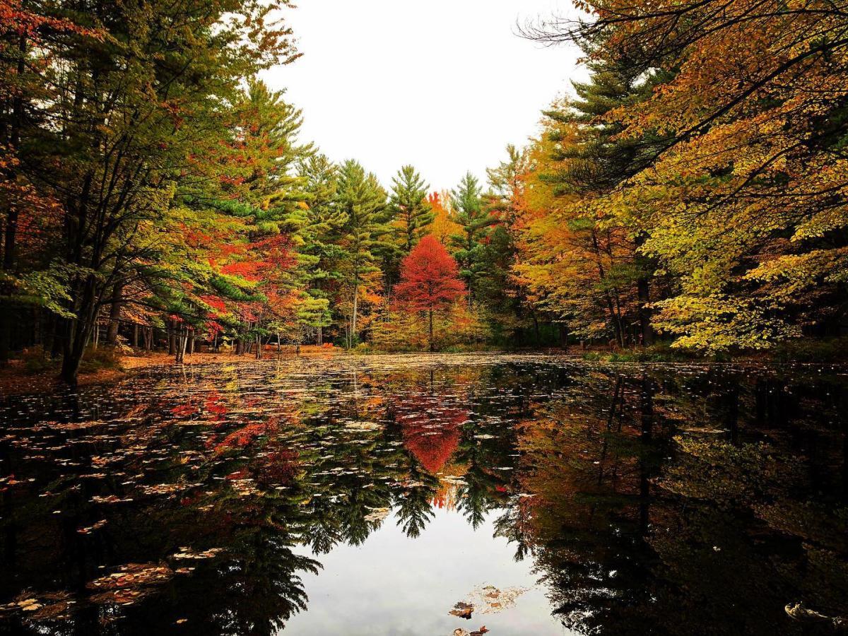 在米德兰陶氏花园的怀廷森林林荫道上,从池塘臂上可以看到秋天的绚丽景色