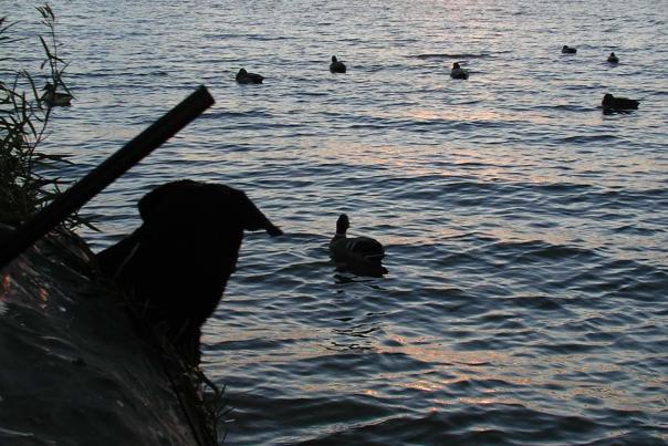 水禽狩猎-萨吉诺湾