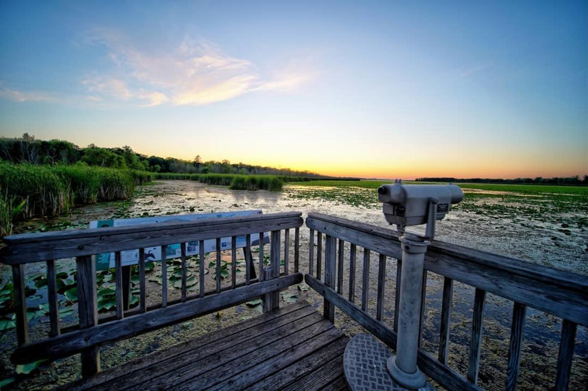 观景台俯瞰海湾城市国家公园托比科沼泽湿地