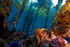 Cal Boat Diving
