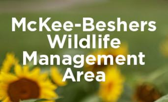McKee-Beshers Sunflower Fields logo