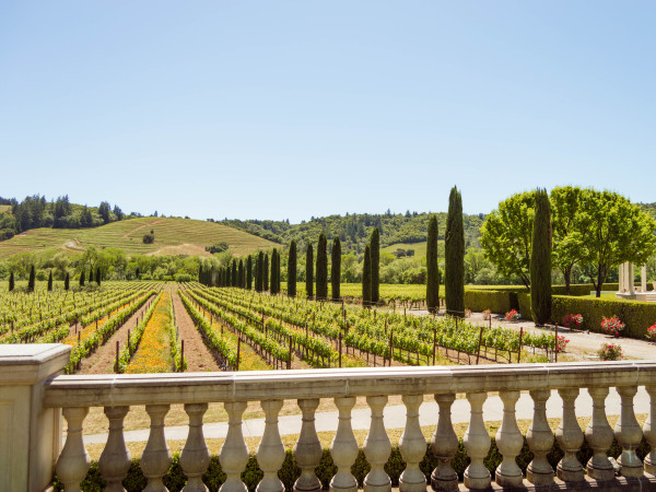 Ferrari Carano Vineyards And Winery Sonomacounty Com