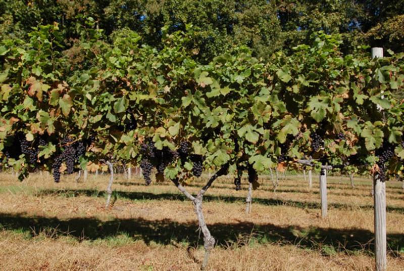 Thanksgiving Farm Winery