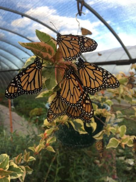 Butterfly Bio-Villa