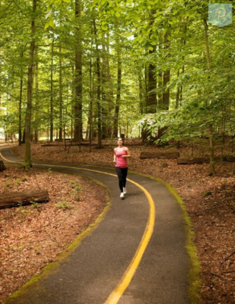 1.5 Mile shaded jogging trail