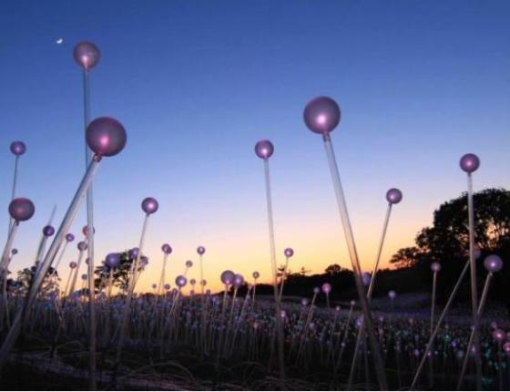 Bruce Munro at Brookgreen:  Southern Light
