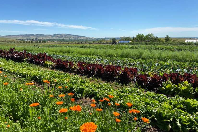 Metacarbon Farm