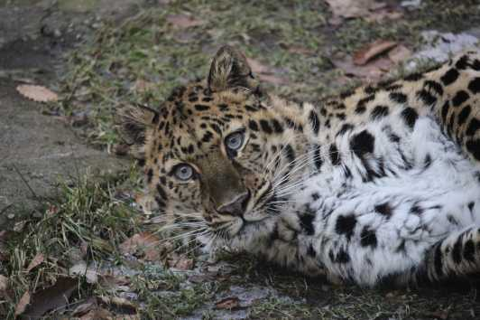 New York's Watchable Wildlife   Natural Habitat and Zoo