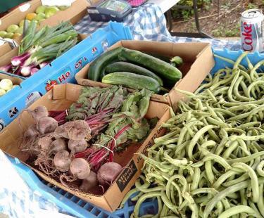 Fresh local veggies & produce