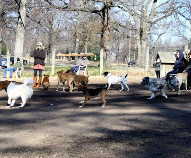 Barker Fielf Dog Park
