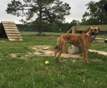 NEW Hanover Dog Park