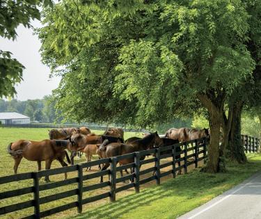 Destination Bluegrass, INC