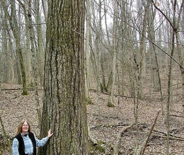 Dorman Preserve Tree