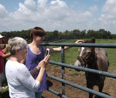 Horse Farm Tours, Inc.