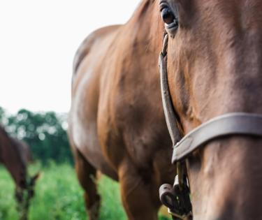 Prime Horse Tours