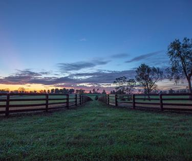 Pin Oak Stud Pastures