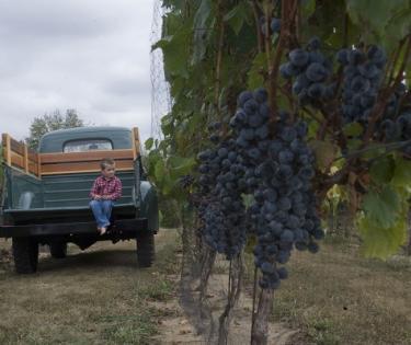 Harkness Edwards Vineyards