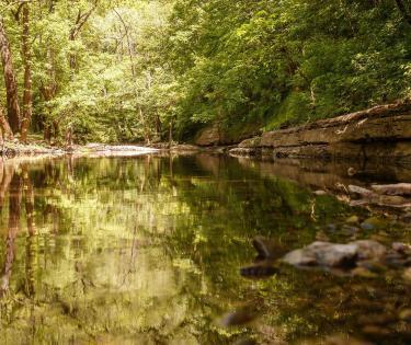 Lower Howard's Creek