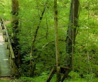 Boonesboro Nature