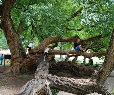 Ft Harrod Tree
