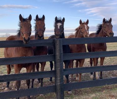 Sun Valley Farm mares fences