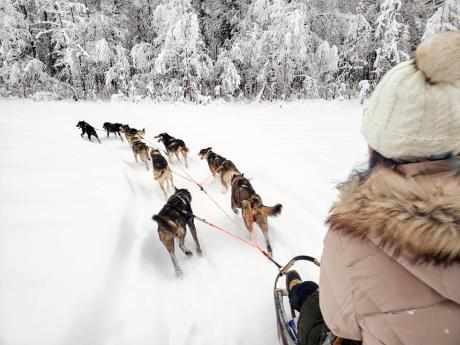 Winter Dog Sledding Adventures!