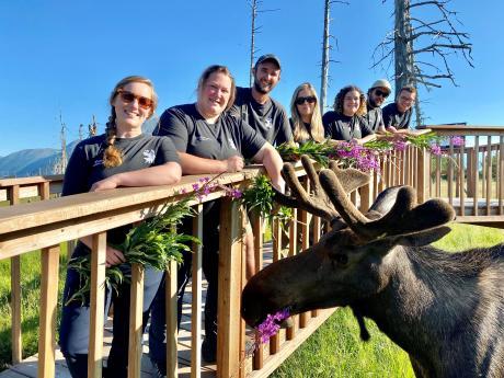 AWCC Moose Encounter