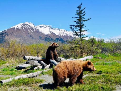 AWCC Brown Bears