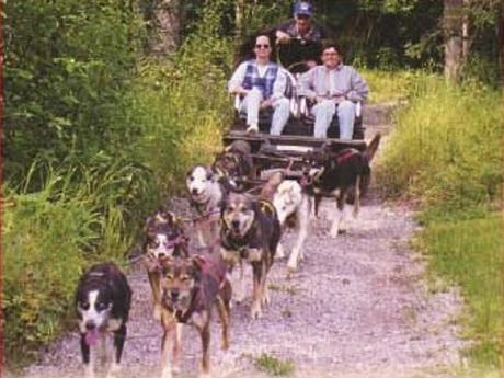 sled dog cart ride