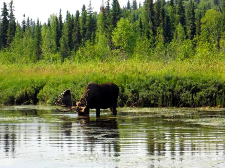 Alaskan Wildlife Viewing