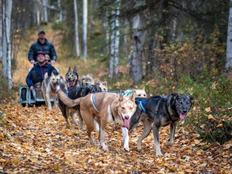 Alaska summer dog sled tours 2