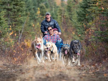 Alaska summer dog sled tours 3