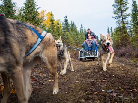 Alaska summer dog sled tours 4