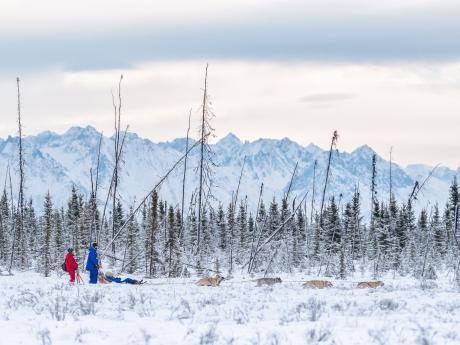Alaska winter dog sledding 1