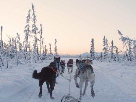 Alaska winter dog sledding 2
