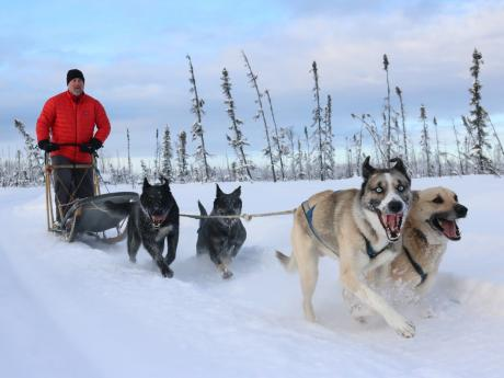 Alaska winter dog sledding 4