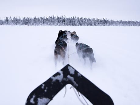 Alaska winter dog sledding 5