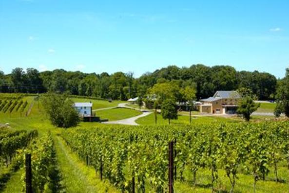 112682_6762_vineyards-behind FH.jpg