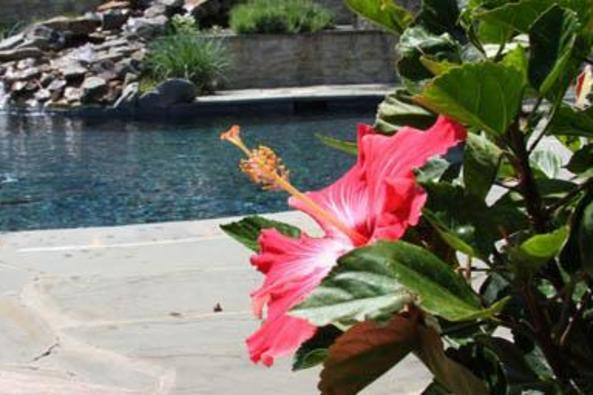 149561_4759_Hillsborough pool.JPG