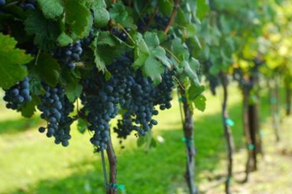 1536_5009_Doukenie Winery.jpg