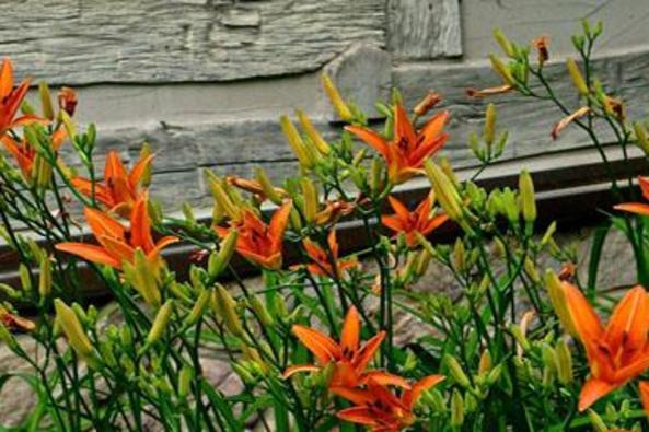 34092_4741_Idyll Gardens.jpg