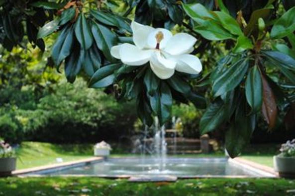 60_4479_reflecting pool with magnolia.jpg