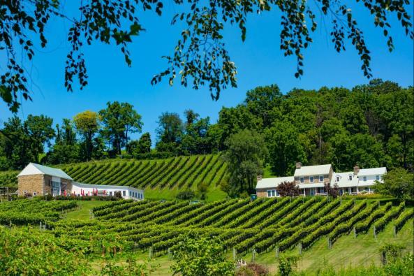 Hillsborough Vineyards Front