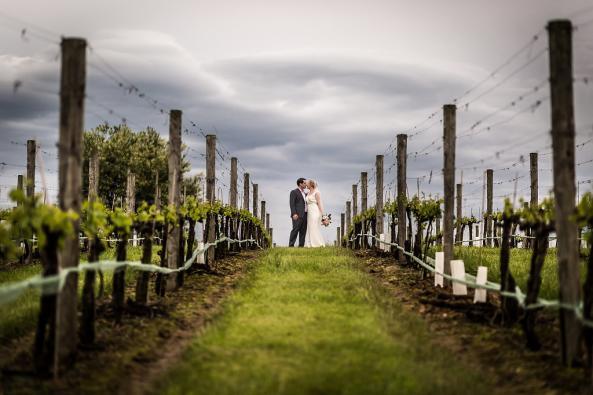 moody skies in the vineyard