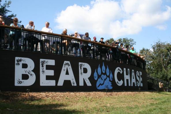 Bear Chase Image 2