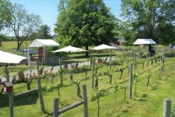 Shiloh Wedding Vineyard