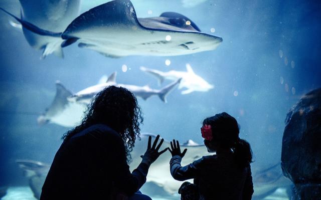 Ripley's Aquarium of the Smokes