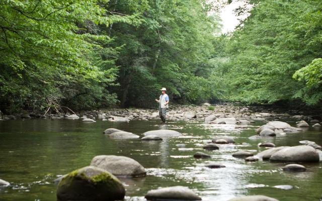 Fly Fishing in the Smokies