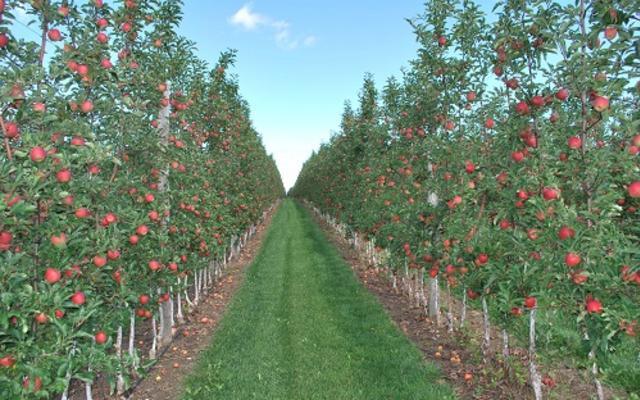 T&K Ferri Orchards