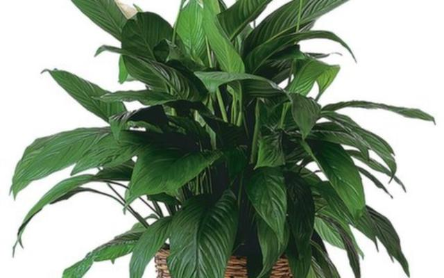 Vast Selection of Tropical plants for rent